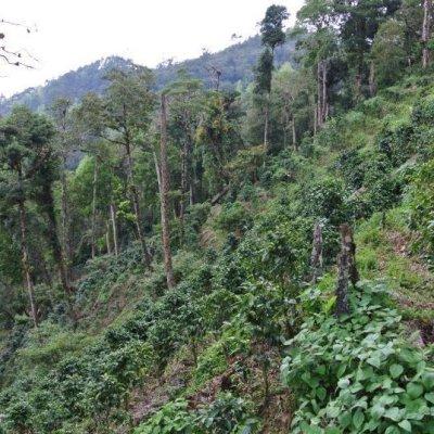 画像5: ニカラグア・エンバシー農園ナチュラル 中煎り (100g入)