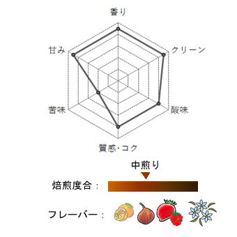 【豆珈房】コスタリカ・オルティス1900ティピカメホラード