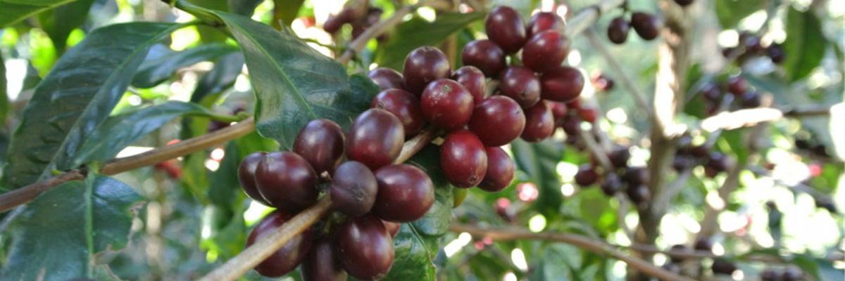 【スペシャルティコーヒー豆珈房】おうちで飲むコーヒーが一番!のお手伝いをします。